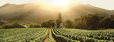 The Cape Winelands man. One of my favourite places in the Cape, actually.