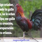 Imagenes De Gallos Con Frases Y Dichos De Galleros Rooster Breeds, Game Fowl, Game Birds, Hens, Roosters, Farming, Chicken, Iphone, Brown