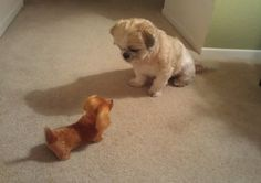 Makai is confused about his new barking toy dog.