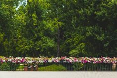 Natura i industrialne otoczenie? Para doskonała! - Inspirowani Naturą Flower Boxes, Flowers, Cities, Plants, Stop It, Window Boxes, Planter Boxes, Plant, Royal Icing Flowers