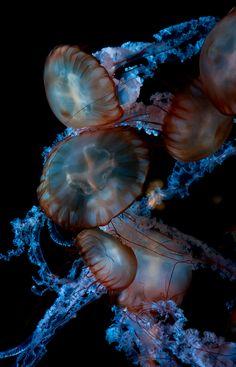Share photos of underwater life. Underwater Creatures, Underwater Life, Ocean Creatures, Beneath The Sea, Under The Sea, Vida Animal, Fauna Marina, Beautiful Sea Creatures, Water Animals