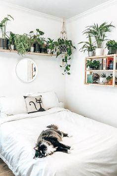 The perfect urban jungle room — bright white sheets, plant shelf, and circle mirror! bedroom minimalist white The perfect urban jungle room — bright white sheets, plant shelf, and circle mirror! Shelf Above Bed, Above Bed Decor, Above Bed Mirror, Shelving Above Bed, Art Above Bed, Mirror Mirror, Room Ideas Bedroom, Bedroom Decor, Bedroom Small