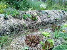 An Emilia Hazelip-bed in our garden. Permaculture, Bed, Garden, Plants, Design, Garten, Stream Bed, Lawn And Garden, Flora