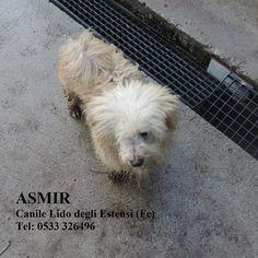 asmir