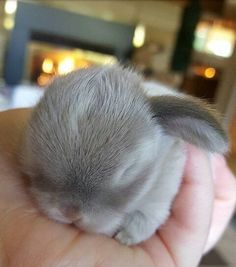 These little bunnies are guaranteed to make you squeal! So precious and delicate! #cute @ cute animals #aww # bunnies # cute bunnies #animal photos # cute animal photos