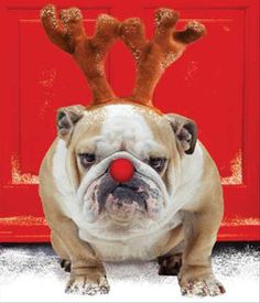 Rudolph's day off... what someone's gotta lead the sleigh...