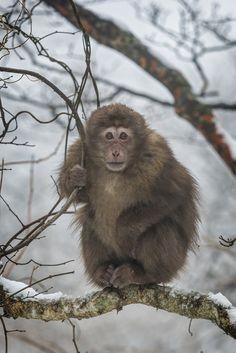 Huangshan monkey by Chaluntorn Preeyasombat on 500px