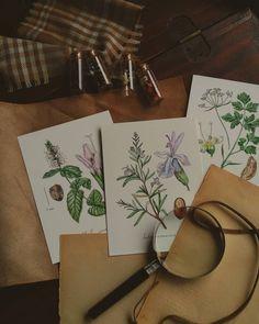 Botanical Illustration, Watercolor Illustration, Watercolor And Ink, Watercolor Paintings, My Photos, Gift Wrapping, The Originals, Artwork, Plants