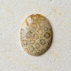 フォッシル・コーラル 日の名残り 39cts./ 化石珊瑚・ルース