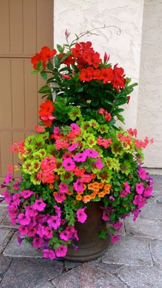 24 designer plant lists for beautiful container gardens & colorful mixed flower pots combinations: great patio planting ideas & backyard landscape designs! – A Piece of Rainbow garden pots color combos 24 Stunning Container Garden Planting Designs Full Sun Container Plants, Container Flowers, Flower Planters, Container Gardening, Flower Pots, Gardening Vegetables, Full Sun Planters, Diy Flower, Evergreen Container