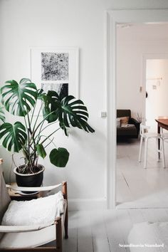 399 Best Plants Scandinavian Interiors Images In 2020