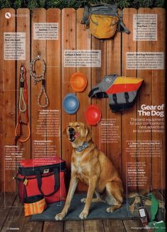 If you are the sort of person who loves hiking or camping with your dog, this gear guide may be something you find helpful! Includes Kurgo's collapsa bowl!