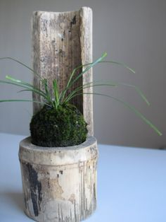 emmymade in Japan: How to Make Kokedama [Video]