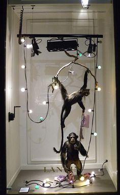 Monkey Business, pinned by Ton van der Veer