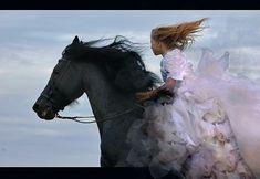 Horses - freedom