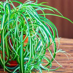 The Best Houseplants that Remove Pollution - Dr. Axe