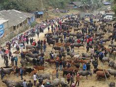 Kết quả hình ảnh cho Chợ bò tại huyện pác nặm