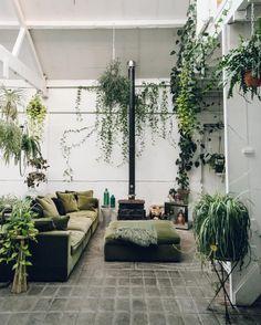 @claptontram • spider plant, pothos, philodendron.