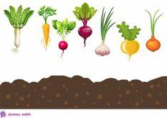 Tracing Worksheets, Preschool Worksheets, Montessori Activities, Craft Activities For Kids, Rainbow Cartoon, Kindergarten, Busy Book, Vegetables, Drawings