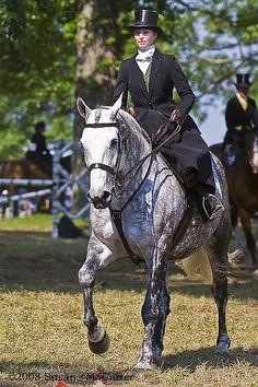 Beautiful horse and rider - side saddle
