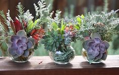 Succulent cuttings nestled with flower arrangements root right in their little jar! (Tip: Keep the succulent cutting above the water line, or use dried flowers) Succulent Cuttings, Propagating Succulents, Succulent Wall, Planting Succulents, Indoor Succulents, Deck The Halls, Dried Flowers, Holiday Fun, Flower Arrangements