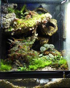 Reptile Terrarium Ideas, Lizard Tank Ideas, Lizard Cage Ideas, Geckos ... 10 Gallon Paludarium