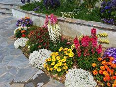 Colorful Border Drought Tolerant Plants