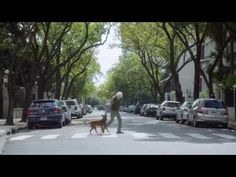 DDB Argentina Launches PSA About Dogs and Organ Transplants | AgencySpy