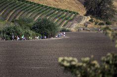 Children's Fun Run at Talley Vineyards - Arroyo Grande, CA | Photographer: Steven Williams | www.theadventureduo.com