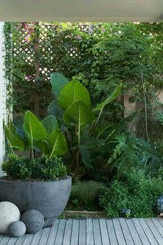 30 Tropical Garden Plants Ideas For You Home Decor. Plantas enormes y maravillos… 30 Tropical Garden Plants Ideas For You Home Decor. Huge and wonderful plants for my garden Small Courtyard Gardens, Back Gardens, Small Gardens, Outdoor Gardens, Courtyard Ideas, Small Courtyards, Atrium Ideas, Modern Gardens, Small Tropical Gardens