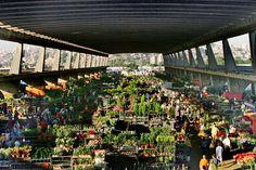 CEASA/CEAGESP - Feira de Flores do Entreposto Terminal São Paulo (ETSP) // zio ren muda de arvore chorao 1983/84