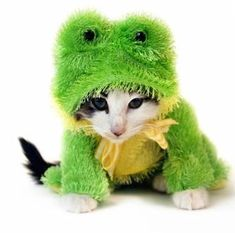 Oh, Drunk Knitter. What have you done now? You put the frog clothes on the cat. I suppose the frog is wearing a cat suit?
