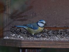 Il giardino per gli uccelli all'interno dei percorsi naturalistici delle Cascate delle Marmore è frequentato da molte specie di volatili.