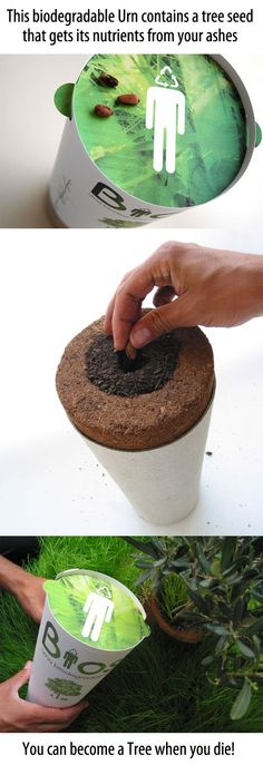 kind of weird but beautiful-become a tree when you die-urn that nourishes a tree seed that you then plant in the ground