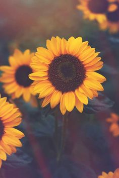 just for you Sunflower Iphone Wallpaper, Flower Phone Wallpaper, Cute Wallpaper Backgrounds, Wallpaper Iphone Cute, Pretty Wallpapers, Tumblr Wallpaper, Aesthetic Iphone Wallpaper, Disney Wallpaper, Sunflower Quotes