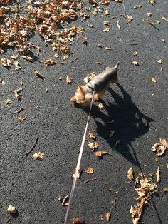 #pet #animal #dog #walk #czechrepublic #autumn