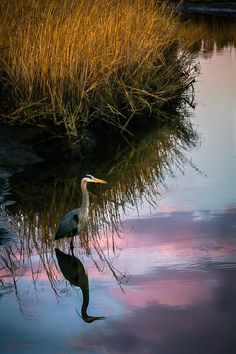 Untitled by Robin Nordmeyer, via 500px, wonderful reflection