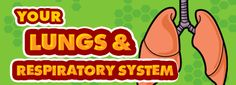 Your Lungs & Respiratory System ... good website for kids