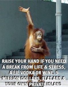 Top 60 Funny Memes And Hilarious Sayings 50 - Funny Monkeys - Funny Monkeys meme - - Top 60 Funny Memes And Hilarious Sayings 50 The post Top 60 Funny Memes And Hilarious Sayings 50 appeared first on Gag Dad. Haha Funny, Funny Jokes, Hilarious Sayings, Funny Stuff, Funny Memes For Him, Thelma & Louise, Sarcastic Quotes, Twisted Humor, Work Humor