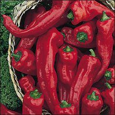 Georgia Flame Peppers