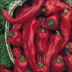 Georgia Flame Peppers - Paprikas