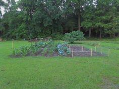 Very young garden