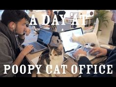 A Day at Poopy Cat Office - YouTube