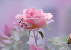 """Как-то раз спросили розу: «Отчего, чаруя око, Ты колючими шипами нас царапаешь жестоко?» «Чтобы сладкого добиться, — отвечал цветок Востока,  Испытай сначала горечь, — без неё не будет прока!»   Шота Руставели """"Витязь в тигровой шкуре"""""""