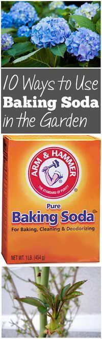 10 Ways to Use Baking Soda in the Garden Use it on begonias to encourage blooms,   1 t per gal water