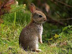 something like a peter rabbit