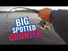 BREEDE RIVER - BIG Spotted Grunter!!! AWESOME WITSAND FISHING!!! BIG River Fish!!! - YouTube River Fish, Fishing, Big, Awesome, Youtube, Freshwater Fish, Youtubers, Peaches, Pisces