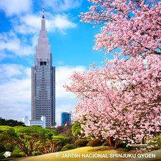 Jardín Nacional Shinjuku Gyoen. Tokio, Japón. Un jardín gigante de más de 58 hectáreas que combina los estilos francés, inglés y japonés y da como resultado un impresionante y bello escenario. Destacan, además de sus 20 mil árboles los mil 500 cerezos que engalan este lugar.