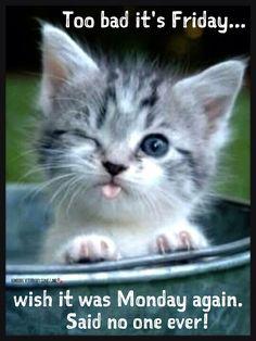 Happy Friday | Friday funny | Animal humor | Cute ...