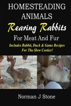 What to ask the breeder, what to avoid, and what makes a good meat rabbit.